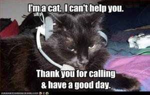 sales cat